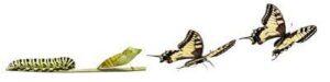 bruco a farfalla per facebook