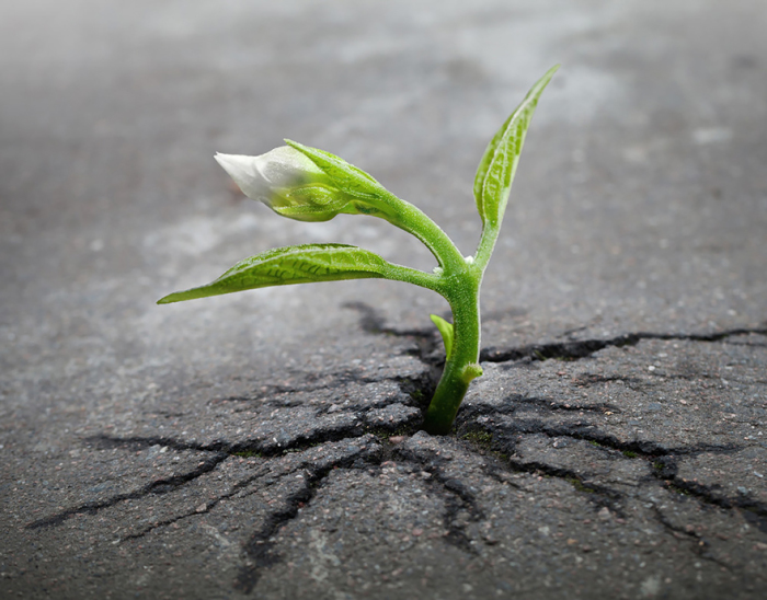 Perseverare è sempre diabolico?